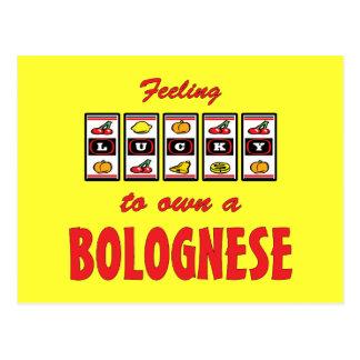 Afortunado a propio un diseño boloñés del perro de postales