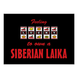 Afortunado a propio un diseño siberiano del perro posters
