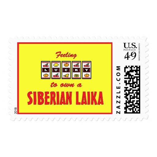 Afortunado a propio un diseño siberiano del perro sellos