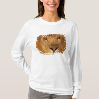 Africa. African male lion, or panthera leo. T-Shirt