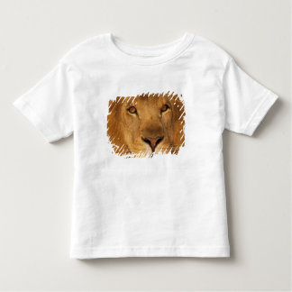 Africa. African male lion, or panthera leo. Toddler T-shirt