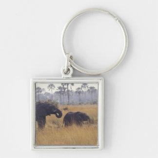 AFRICA, Botswana, African Elephant Keychain