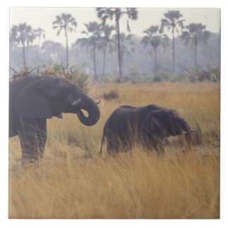 AFRICA, Botswana, African Elephant Tile