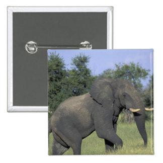 AFRICA Botswana Chobe National Park Elephant Pins