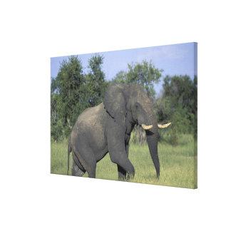 AFRICA, Botswana, Chobe National Park, Elephant Canvas Print