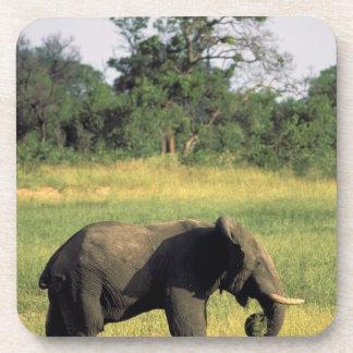 Africa, Botswana, Chobe National Park. Elephant Beverage Coaster