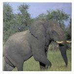 AFRICA, Botswana, Chobe National Park, Elephant Large Square Tile