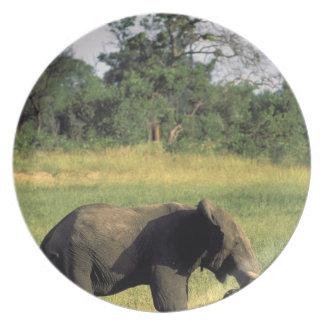 Africa, Botswana, Chobe National Park. Elephant Melamine Plate