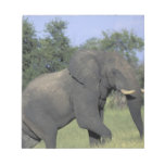 AFRICA, Botswana, Chobe National Park, Elephant Memo Note Pads