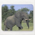 AFRICA, Botswana, Chobe National Park, Elephant Mouse Pad