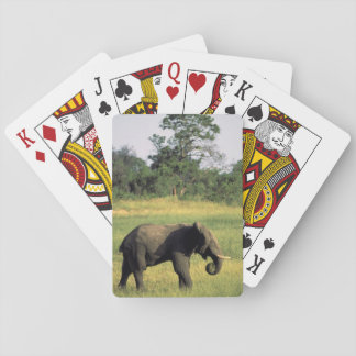 Africa, Botswana, Chobe National Park. Elephant Playing Cards