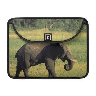 Africa, Botswana, Chobe National Park. Elephant Sleeve For MacBook Pro