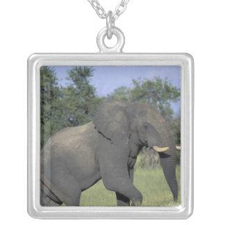 AFRICA, Botswana, Chobe National Park, Elephant Square Pendant Necklace