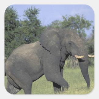 AFRICA, Botswana, Chobe National Park, Elephant Square Sticker