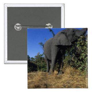 Africa Botswana Chobe National Park Elephants Button