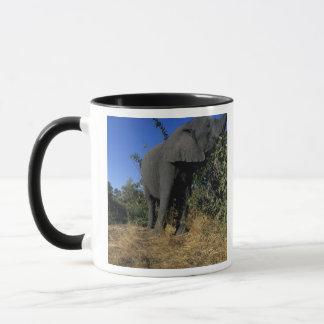 Africa, Botswana, Chobe National Park, Elephants Mug