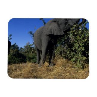 Africa, Botswana, Chobe National Park, Elephants Rectangular Photo Magnet