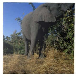Africa, Botswana, Chobe National Park, Elephants Tile