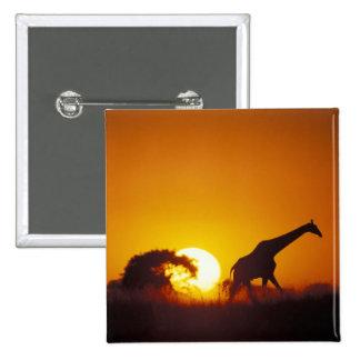 Africa, Botswana, Chobe National Park, Giraffe 2 Button