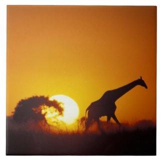 Africa, Botswana, Chobe National Park, Giraffe 2 Ceramic Tile