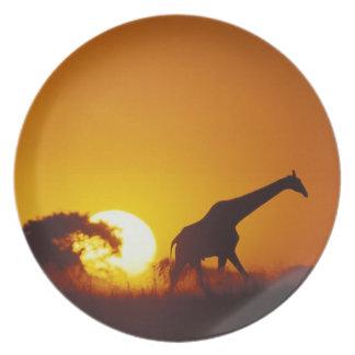 Africa, Botswana, Chobe National Park, Giraffe 2 Dinner Plate