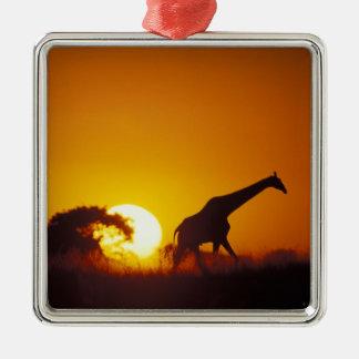 Africa, Botswana, Chobe National Park, Giraffe 2 Metal Ornament