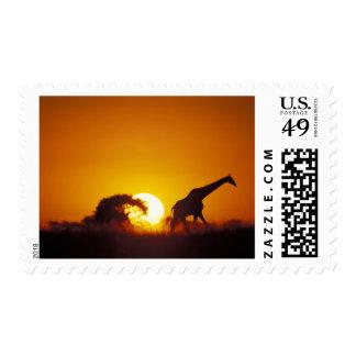 Africa, Botswana, Chobe National Park, Giraffe 2 Postage Stamps