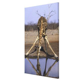 Africa, Botswana, Chobe National Park, Giraffe Canvas Print