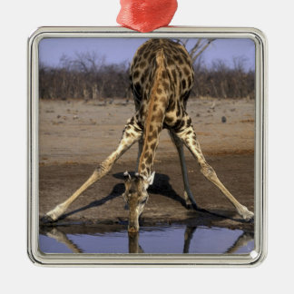 Africa, Botswana, Chobe National Park, Giraffe Metal Ornament