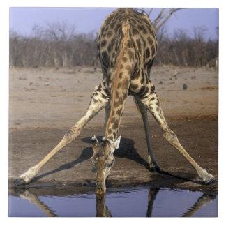Africa, Botswana, Chobe National Park, Giraffe Tile