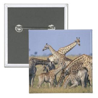 Africa Botswana Chobe National Park Herd of 2 Button
