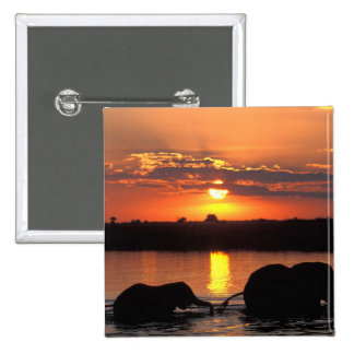 Africa, Botswana, Chobe National Park, Herd of 2 Inch Square Button