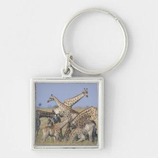 Africa, Botswana, Chobe National Park, Herd of 2 Keychain