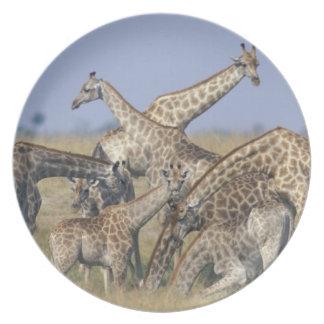 Africa, Botswana, Chobe National Park, Herd of 2 Melamine Plate