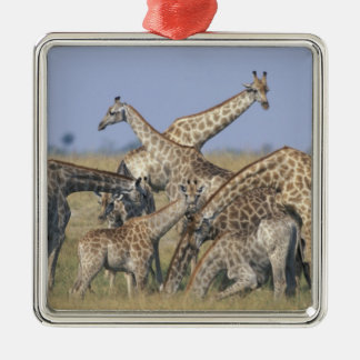 Africa, Botswana, Chobe National Park, Herd of 2 Metal Ornament