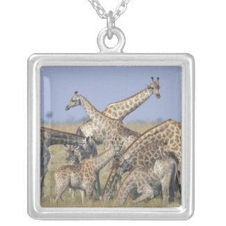 Africa, Botswana, Chobe National Park, Herd of 2 Square Pendant Necklace