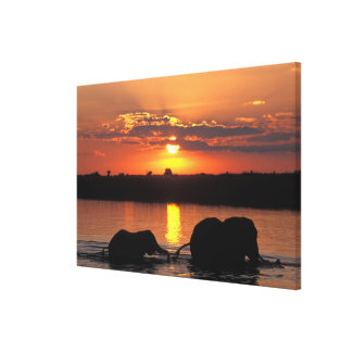 Africa, Botswana, Chobe National Park, Herd of Gallery Wrap Canvas