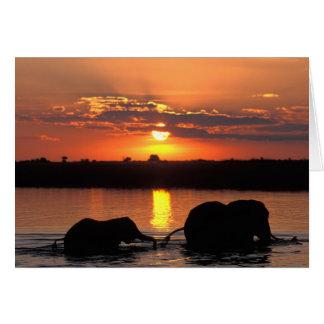 Africa, Botswana, Chobe National Park, Herd of Card