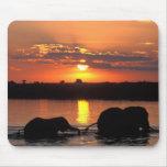 Africa, Botswana, Chobe National Park, Herd of Mouse Pad