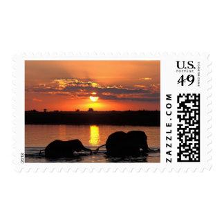 Africa, Botswana, Chobe National Park, Herd of Stamp