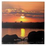 Africa, Botswana, Chobe National Park, Herd of Ceramic Tile
