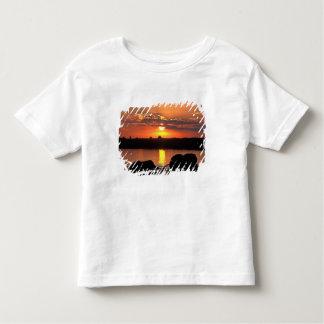 Africa, Botswana, Chobe National Park, Herd of Toddler T-shirt