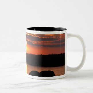 Africa, Botswana, Chobe National Park, Herd of Two-Tone Coffee Mug