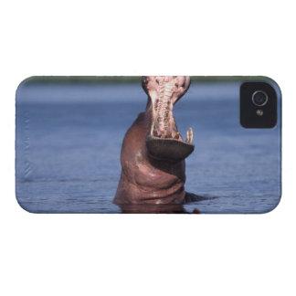 Africa. Botswana. Chobe National Park. Hippo iPhone 4 Cover