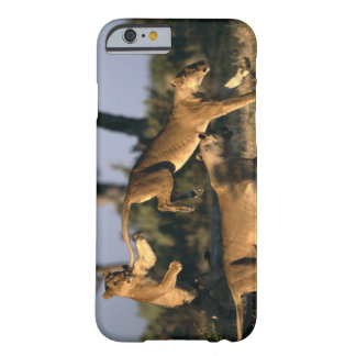 Africa, Botswana, Chobe National Park, Lionesses Barely There iPhone 6 Case