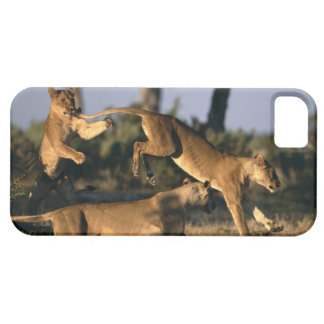 Africa, Botswana, Chobe National Park, Lionesses iPhone 5 Cover