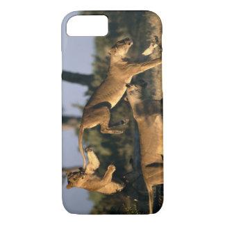 Africa, Botswana, Chobe National Park, Lionesses iPhone 7 Case