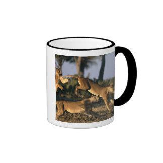 Africa, Botswana, Chobe National Park, Lionesses Coffee Mug