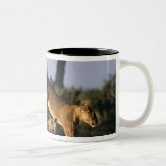 Africa, Botswana, Chobe National Park, Lionesses Mug