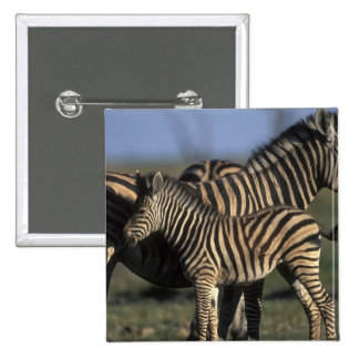 Africa Botswana Chobe National Park Plains Buttons